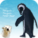 Penguin Penguin Polar Bear - Memory game for children and families